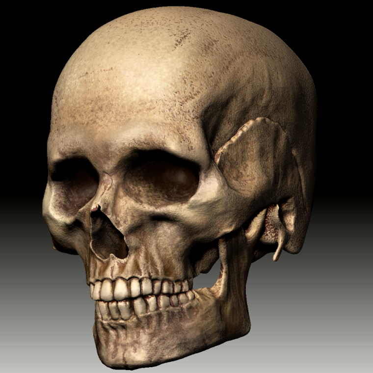 0_1507217034340_ZBrush Document_Skull2.png