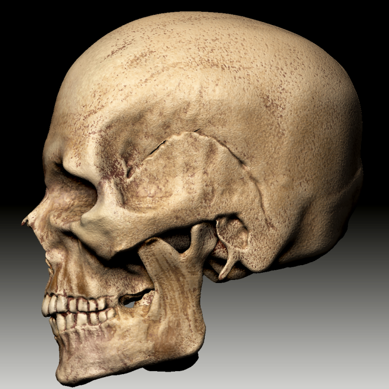 0_1507217042372_ZBrush Document_Skull4_side.png