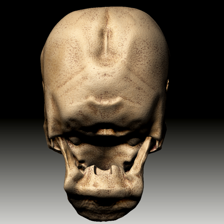 0_1507217046648_ZBrush Document_Skull5_back.png