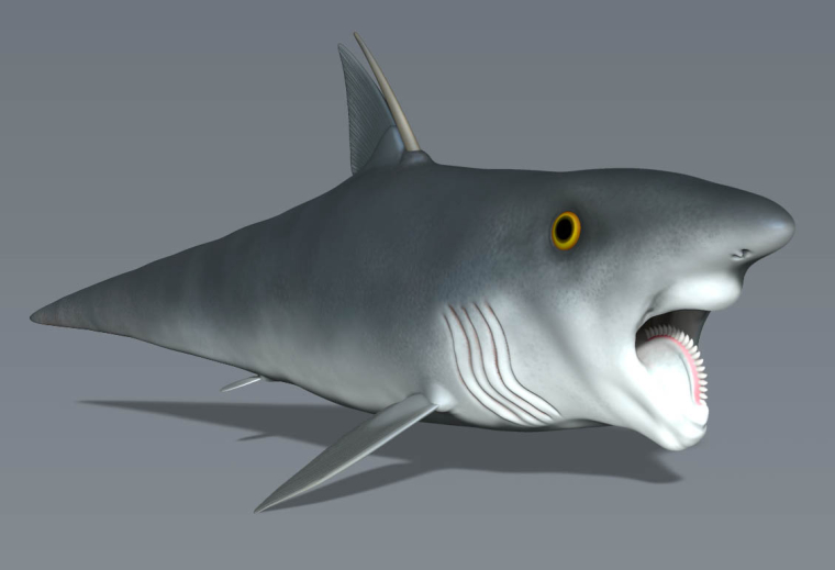 0_1533791141835_helicoprion1.jpg